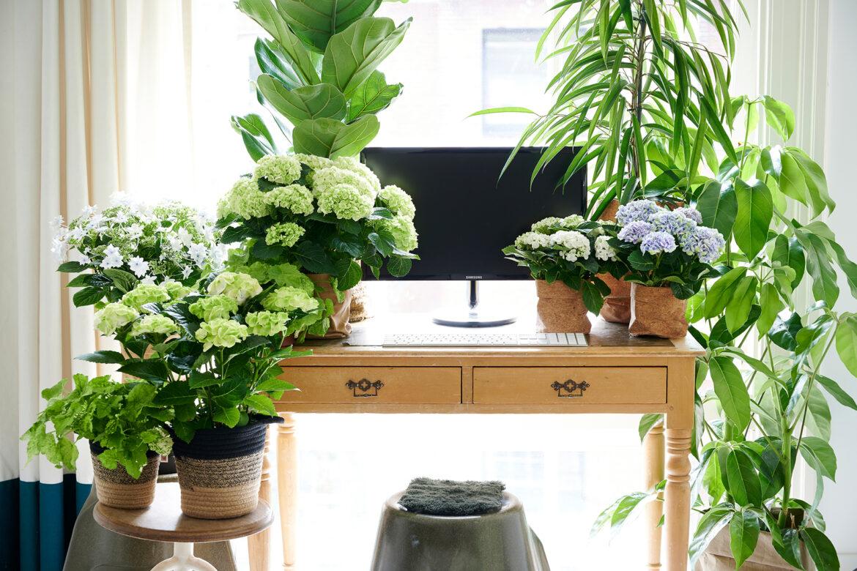 Einrichtungstrend »Green Sanctuary« – Pflanzen sind das neue Wohnaccessoire