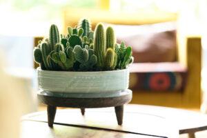 Plant-Pot-Guide: Jede Pflanze findet ihren Topf