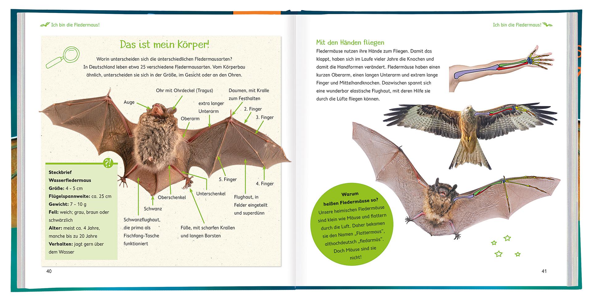 WILD! Die Fledermaus – Beispielseiten 40 und 41