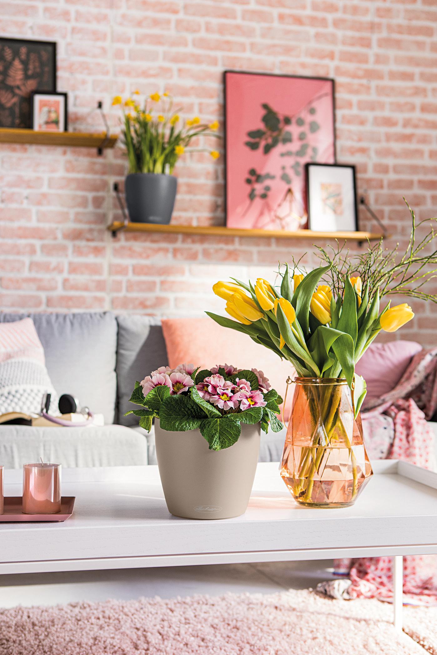 Mit Primeln im CLASSICO Color holst du dir im Handumdrehen den Frühling ins Haus