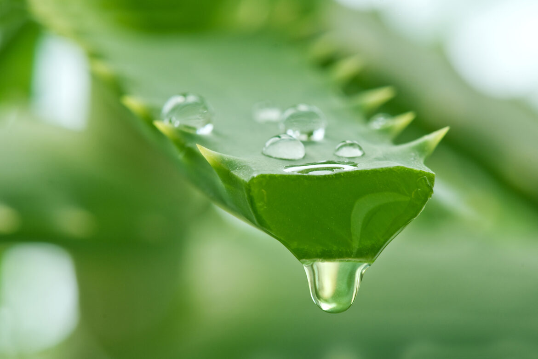 Grüne Schönheit – ELIXR ALOE VERA GEL