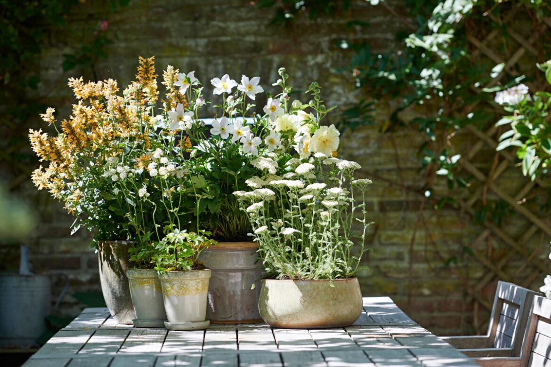 Sommer, Sonne, Pflanzenwonne ... – Drei Tipps für einen wunderbaren Sommer