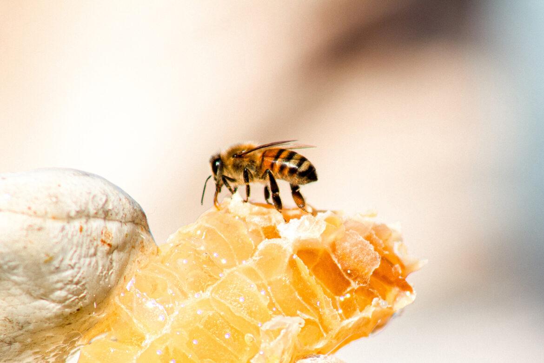 Bienenhaltung – alles andere als easy