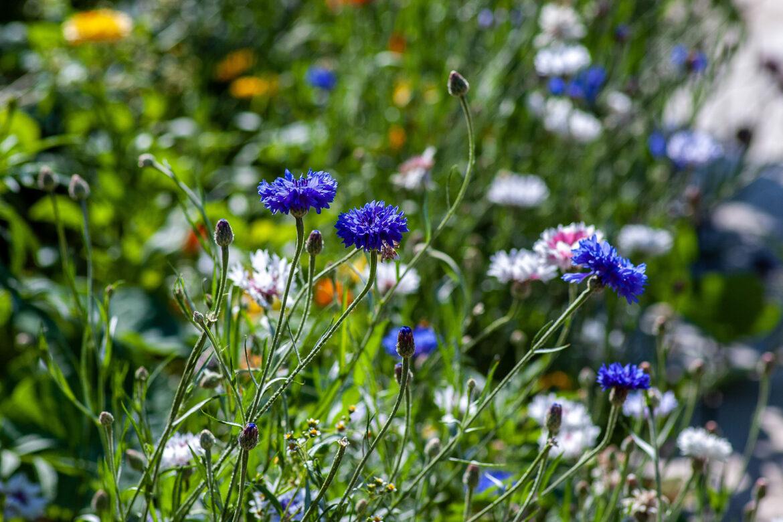 Bei den Profis abgeschaut – Ideen für deinen Naturgarten