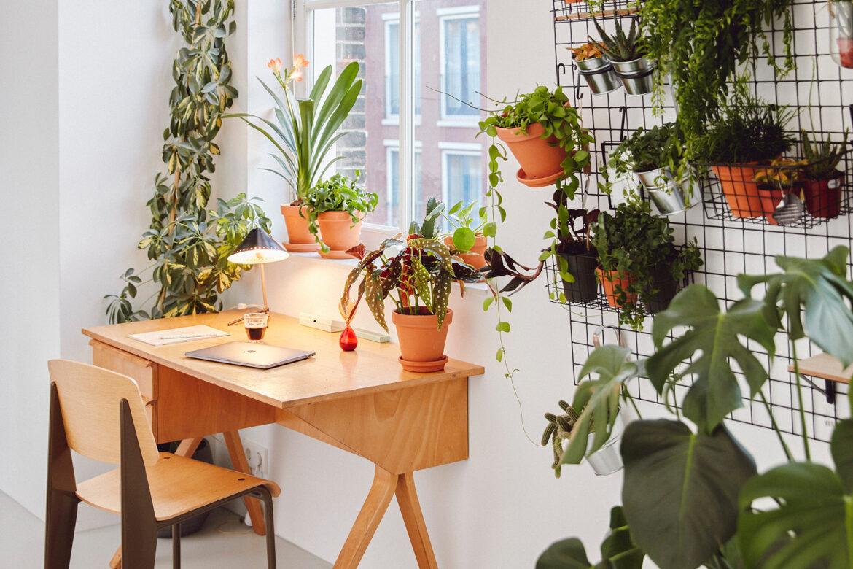Entspanntes Arbeiten im Homeoffice dank Zimmerpflanzen – Ideen für einen inspirierenden Arbeitsplatz