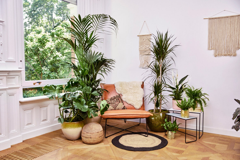Urlaub unter Palmen – Auf zur Fernreise in den eigenen vier Wänden