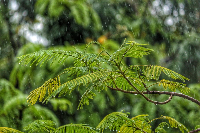 Tipps vom Bioterra-Gartenberater: Gutes für die Gärten nach Starkregen und Sturm