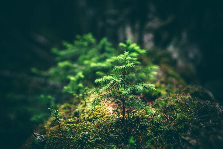 Im Lindenwirt sind noch Bäume frei ...