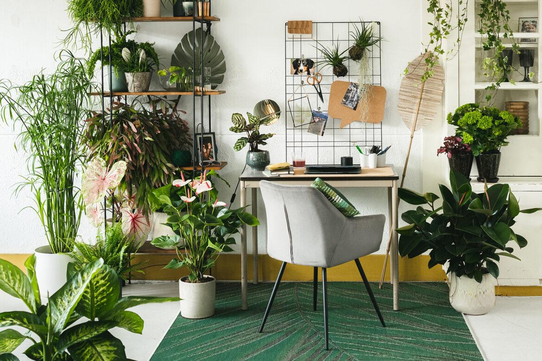 Besseres Arbeiten mit Monstera und Co. – Pflanzen am Arbeitsplatz entspannen den Chef
