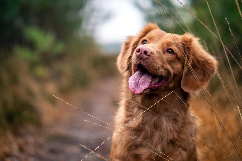 Sitz! Von Hunden und ihren Menschen – Haufenweise Gedichte