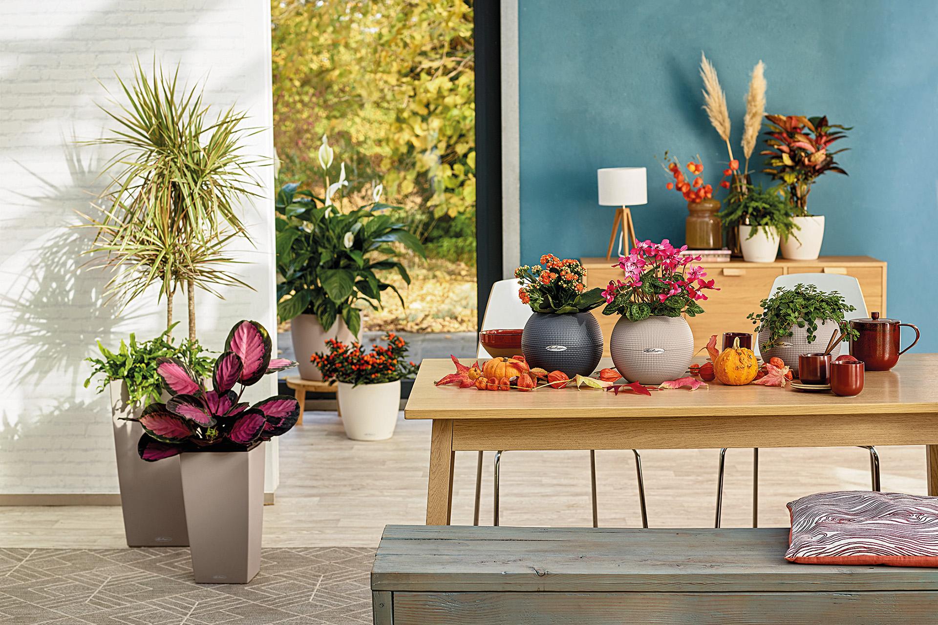 Farbenfrohe Herbstdeko mit LECHUZA