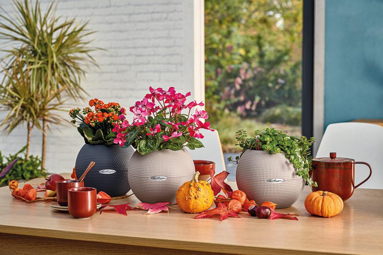 Stilvolle Herbstdeko für dein Zuhause