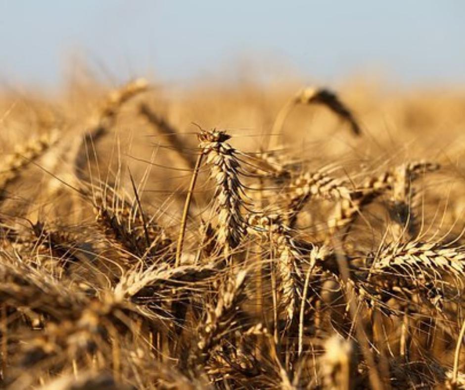 Det Sociale Landbrug