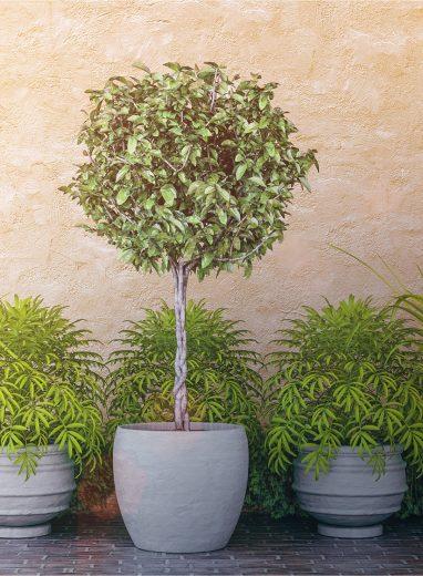 Spherical Topiary