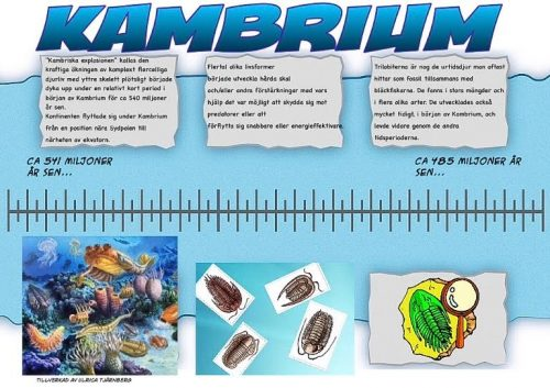 2 Kambrium
