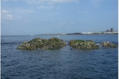 Gun Rocks low tide