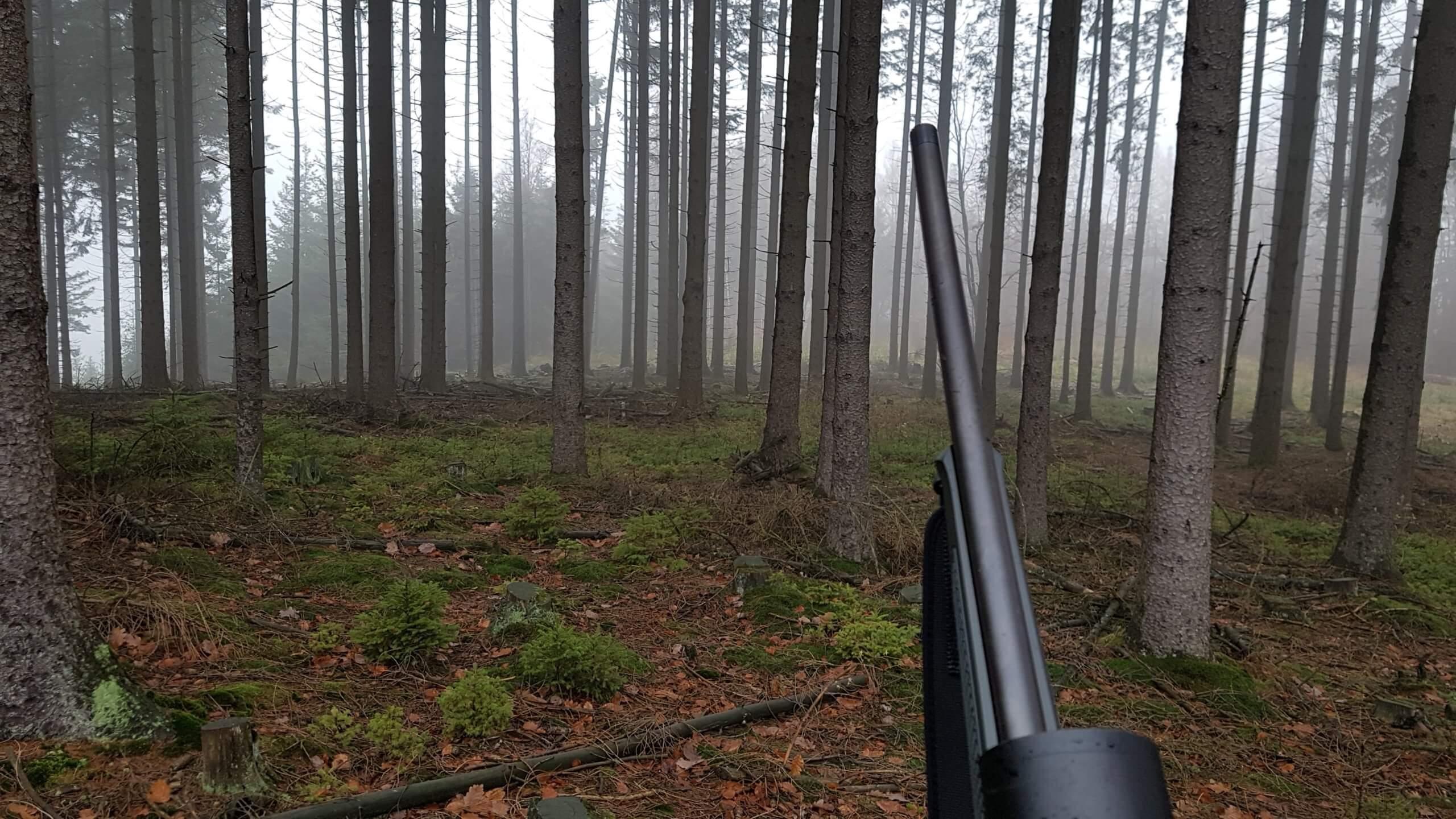 Drückjagd Wald