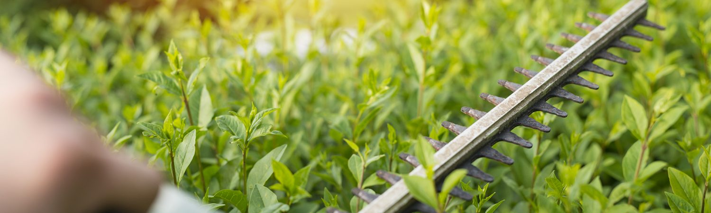 Mantenimiento  Arbustos, Masas Arbustivas, Setos, Flor de temporada y Mobiliario
