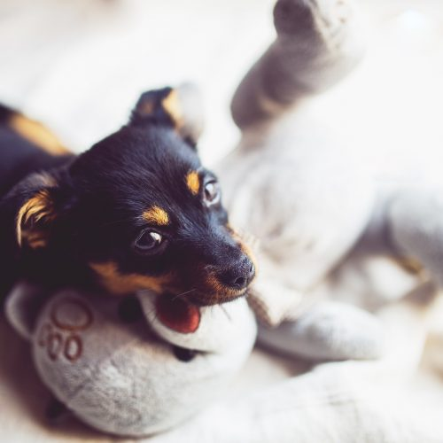 hundevenlig klinik hos Haarby Dyreklinik