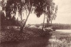 Kornsjø