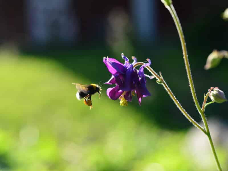 Naturskyddsföreningens kampanj Rädda bina får stark uppbackning