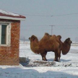 Mongolia Train 2004
