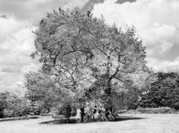 Still from Wyndham's Oak