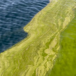 Algal Bloom Arabian Sea