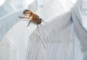 Read more about the article Zero Waste mit Bienenwachstüchern
