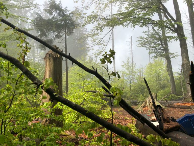 Read more about the article Drei Generationen pflanzen einen Wald an