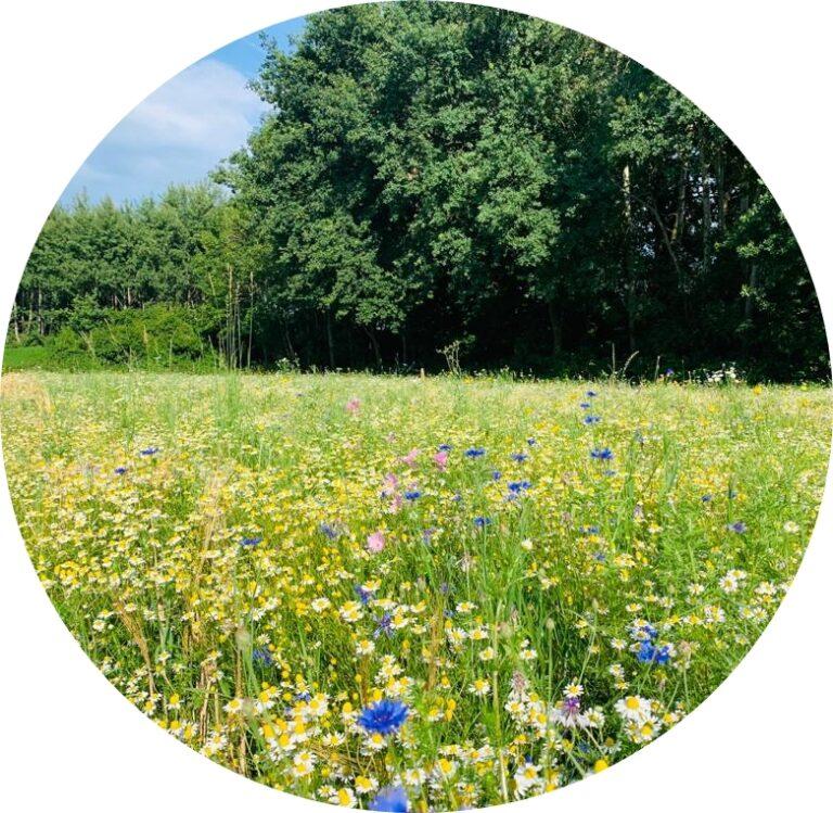 Bienen- und insektenfreundliche Pflanzen für Balkon und Garten