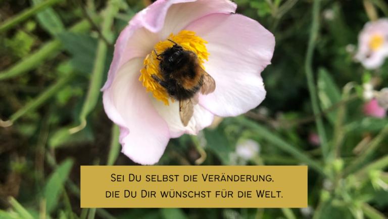Read more about the article Geh mit gutem Beispiel voran!