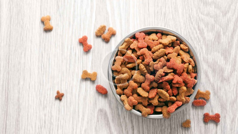 What a Newbie Should Know about Dog Food