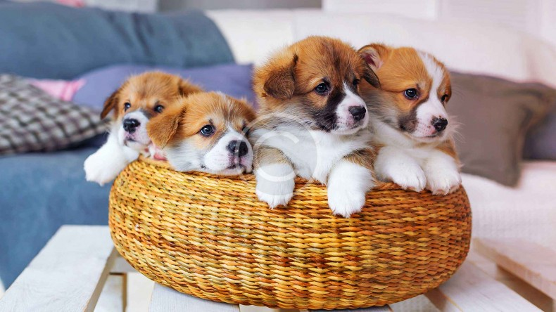 Cuties for Adoption