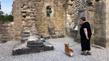 Nosework vid Roma klosterruin