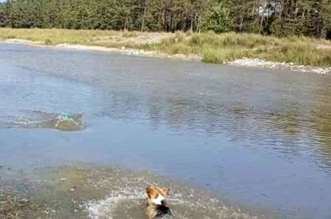 Ymer-vattentorpeden apporterar