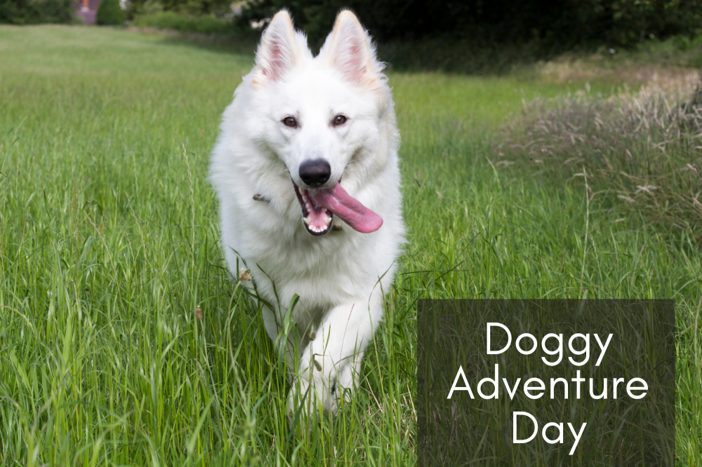 Doggy Adventure Day Cover