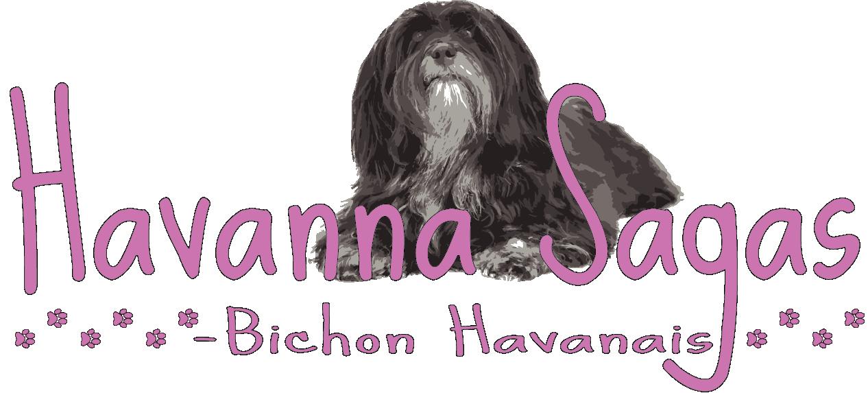 Havanna Saga's Havanese