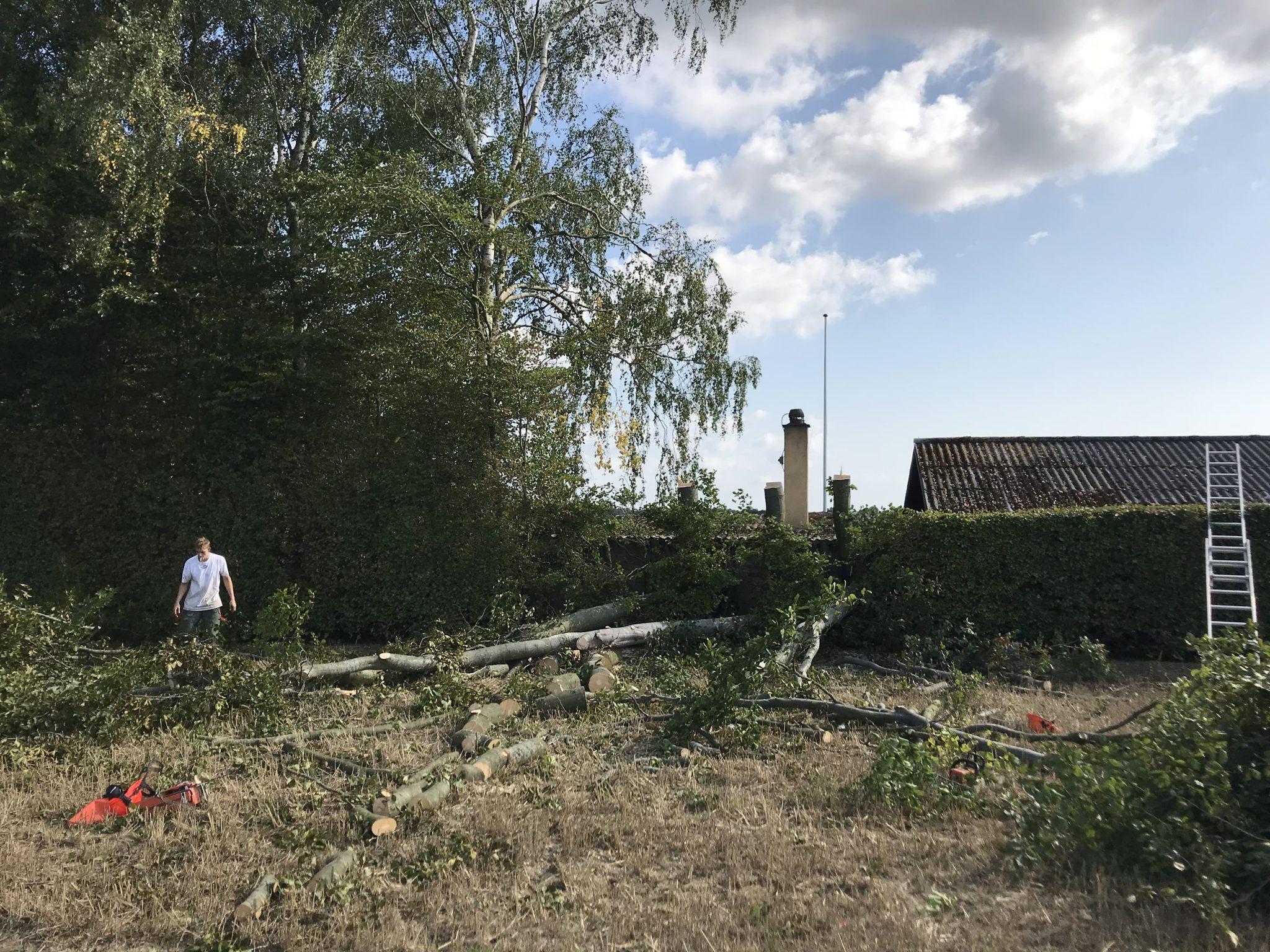 Træfældning Odense
