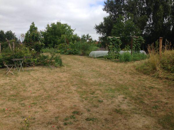 tørke i haven
