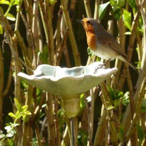 Til fuglene