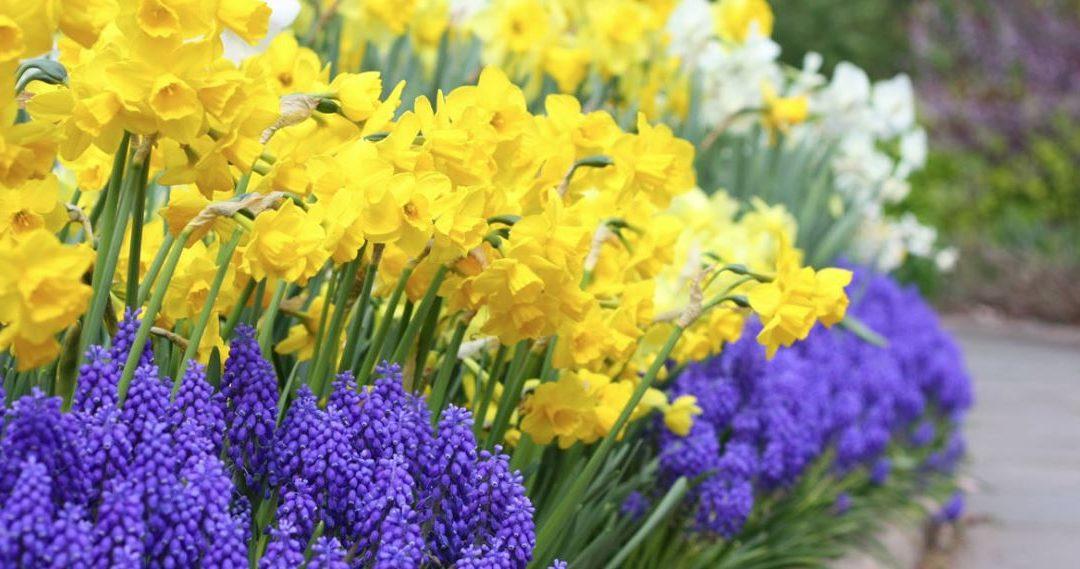 Haven i april