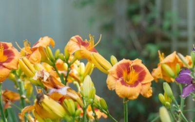 Blomsterløg i flere lag