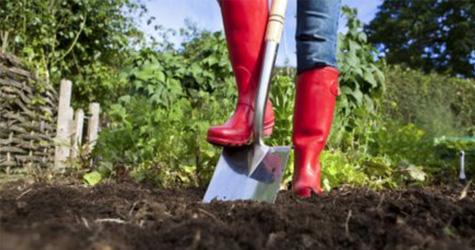 haven skal gødes i maj