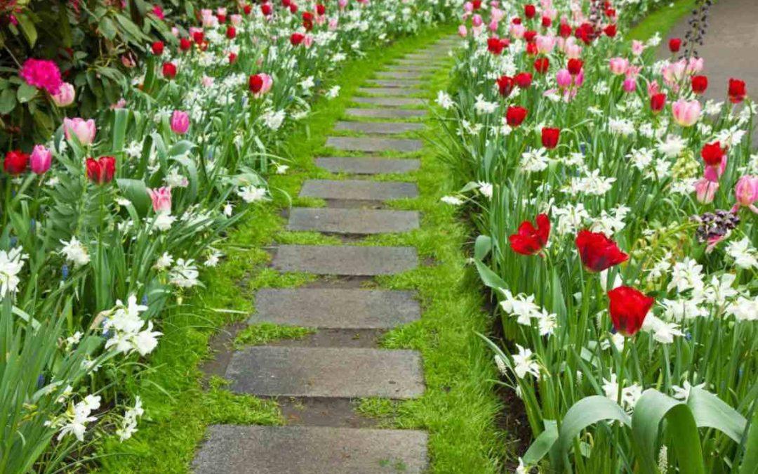 haven i maj bliver så flot af fine blomster