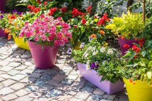 blomster i krukker i maj måned