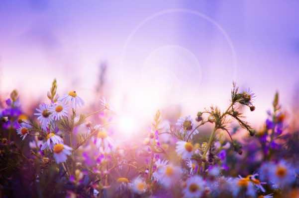 blomster i haven om foråret