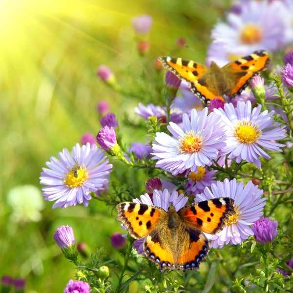 blomster med sommerfugle om foråret