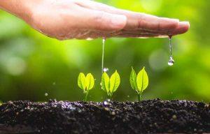 Vanding og gødning af havens jord i maj