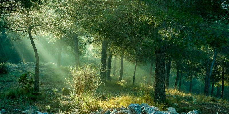 bos in ochtendlicht © Marlene Vicente _ Dreamstime.com